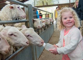 Mead Open Farm Day Nursery, Leighton Buzzard, Bedfordshire